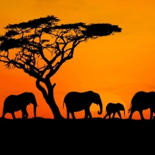 Africa and safari