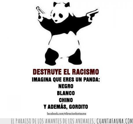 Pandas Contra El Racismo Frases De Racismo Racismo Y Discriminacion Pandas