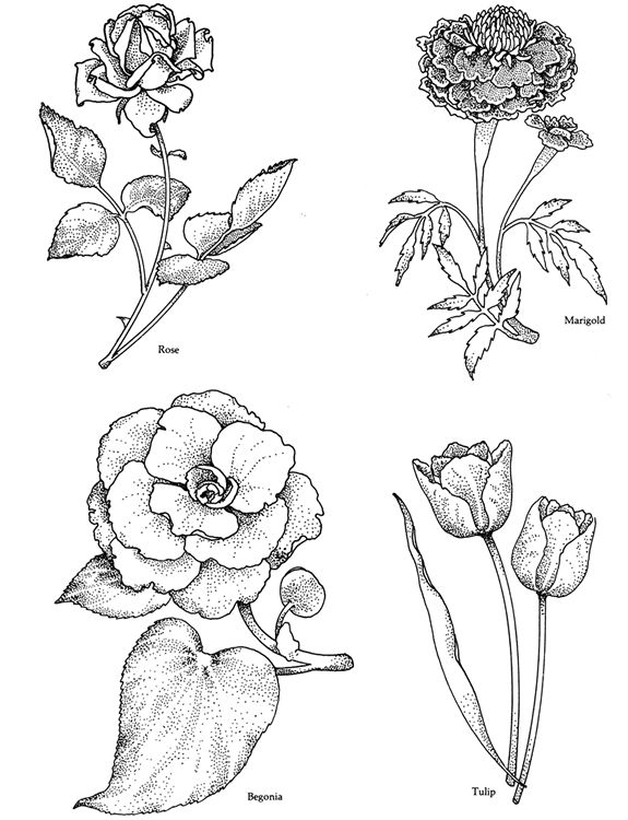 Welcome To Dover Publications Flower Drawing Floral Drawing Flower Art