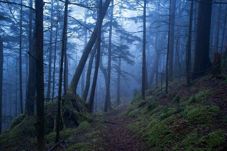 Baxter Creek Trail in the Great Smokey Mountains National Park