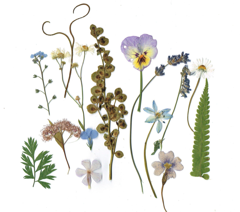 Echte gepresste Pflanzen Mix – getrocknete Blätter & Blüten – SET von 15 – getrocknete natürliche Blumen – gepresste Mix Floral – blau Lila grüne Pflanzen für Kunst