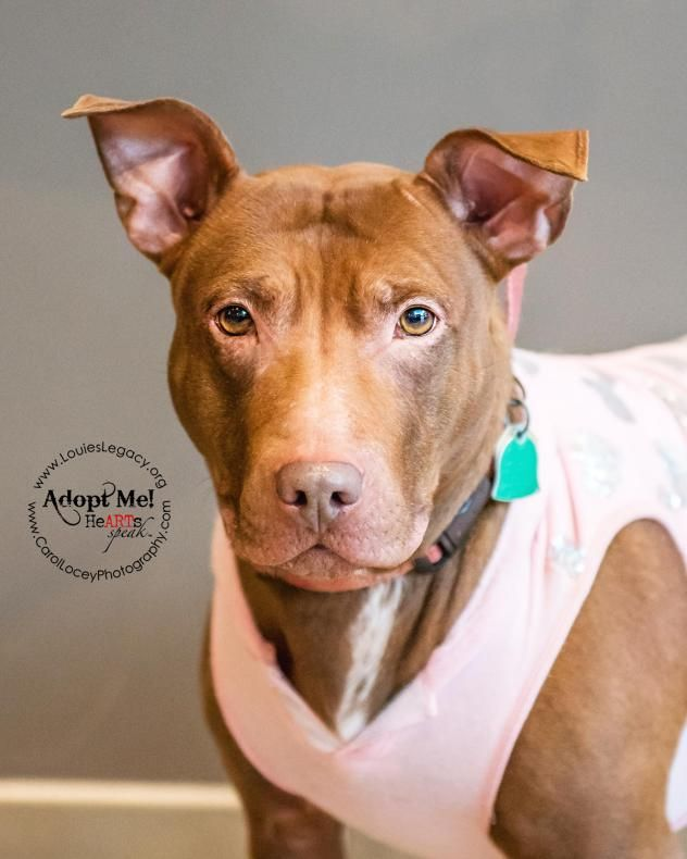 Adopt Pallie 14 On Pitbull Terrier Terrier Mix Dogs Dogs