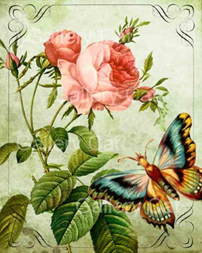 Laminas Y Trabajos Con Flores Old English Roses English Roses Digital Collage Sheets