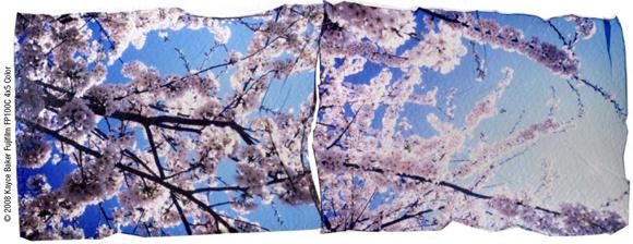 Emulsion Lift using Fujifilm FP-100C45 © 2008 Kayce Baker Fujifilm FP100C 4x5 Color