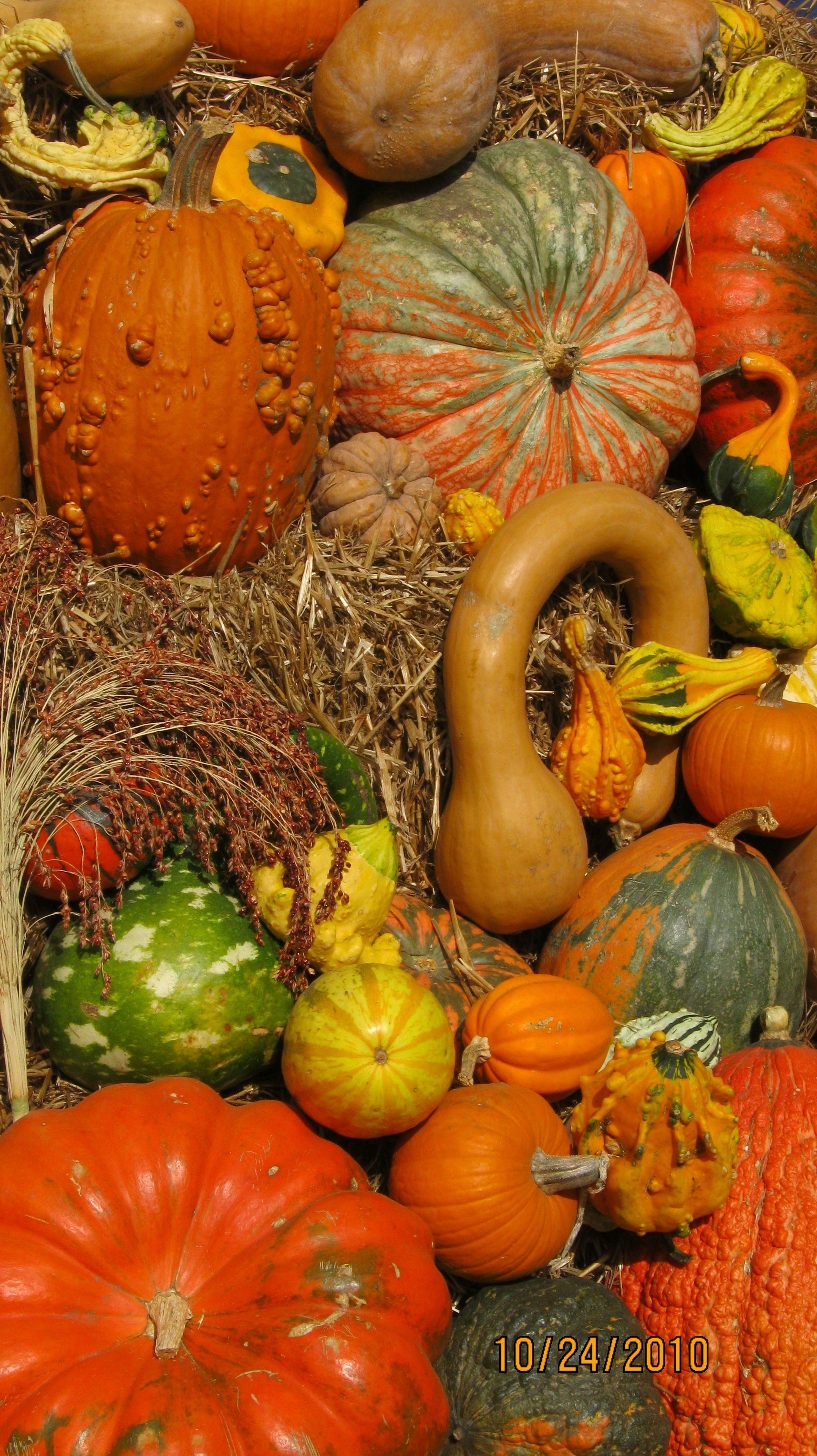 Good Gourd!!!! photo by Jan Seipel (With images) Fall