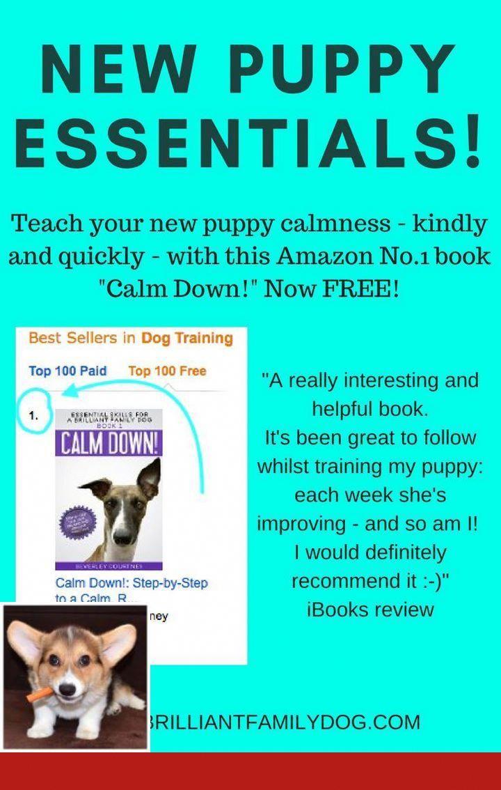 Dog Tricks Food Nose Dogtraining And Clickertraining Good Dog