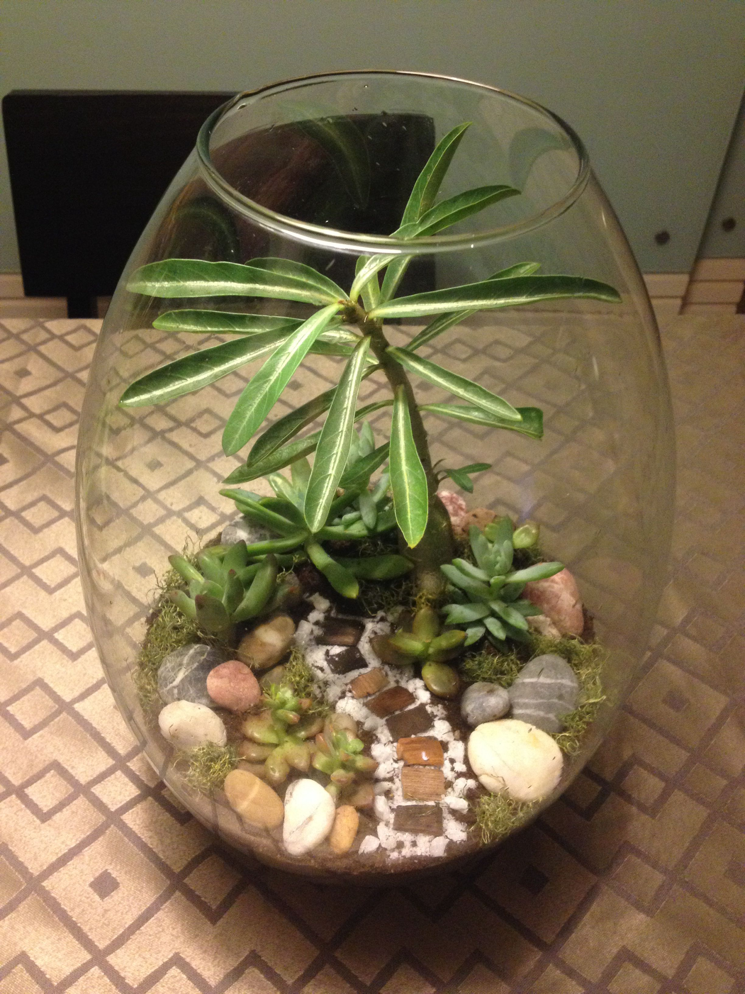 My Own Mini Garden Terrarium With A Desert Rose And Succulents
