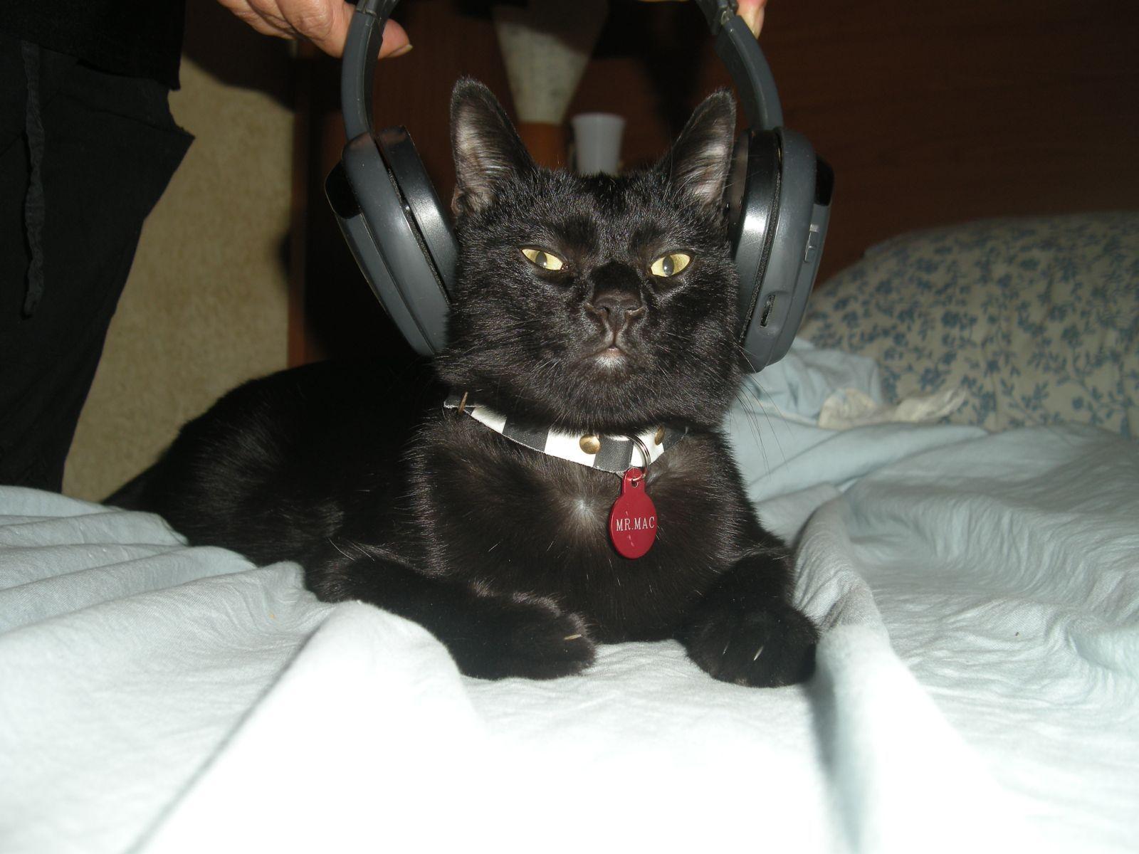 Serafo's Cat