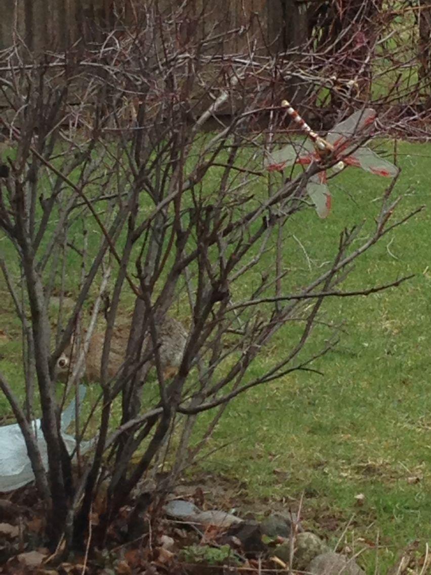 Bunny hiding by bush