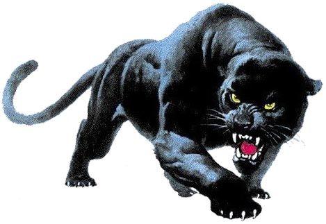 black panther auf dem klavier