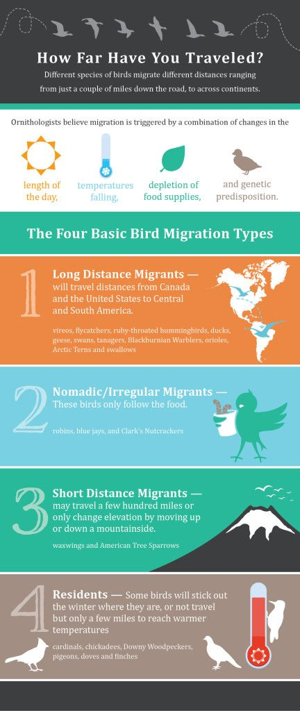 Bird Migration Types Bird Migration Traveling By Yourself Migrations