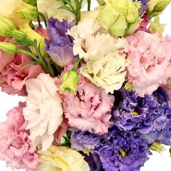 Fill your bridal arrangements or party centerpieces with texture and gorgeous color. The Assorted Frill Lisianthus Flower features unique multi-bloom stems that open up to unveil dreamy ruffled rosette blooms. The whimsical stems, much like a spray rose, features open blooms that trail into small buds for even extra texture. Easily arrange the stems with other FiftyFlowers favorites like standard roses and stock flowers for even extra volume or arrange alone for a happy, colorful display.