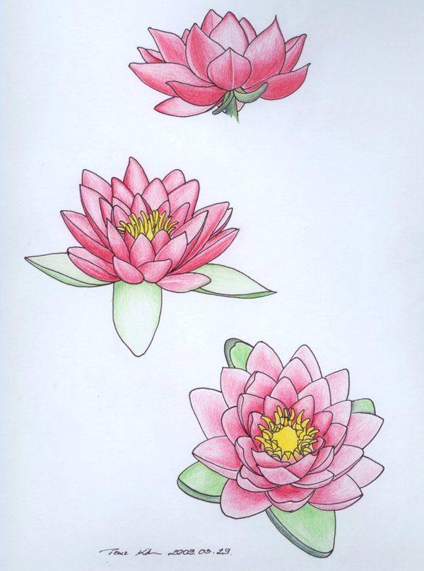 Water Lily Studies Water Lily Tattoos Lily Tattoo Flower Tattoo Sleeve Men