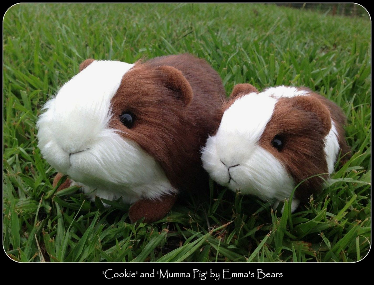 Happy cavy Guinea Pigs And Cages