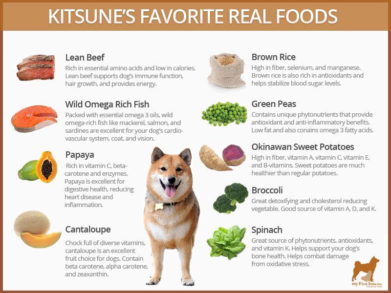 Best Dog Food For Shiba Inus My First Shiba Inu Dog Food Recipes Easy Dog Cake Recipe Best Dog Food