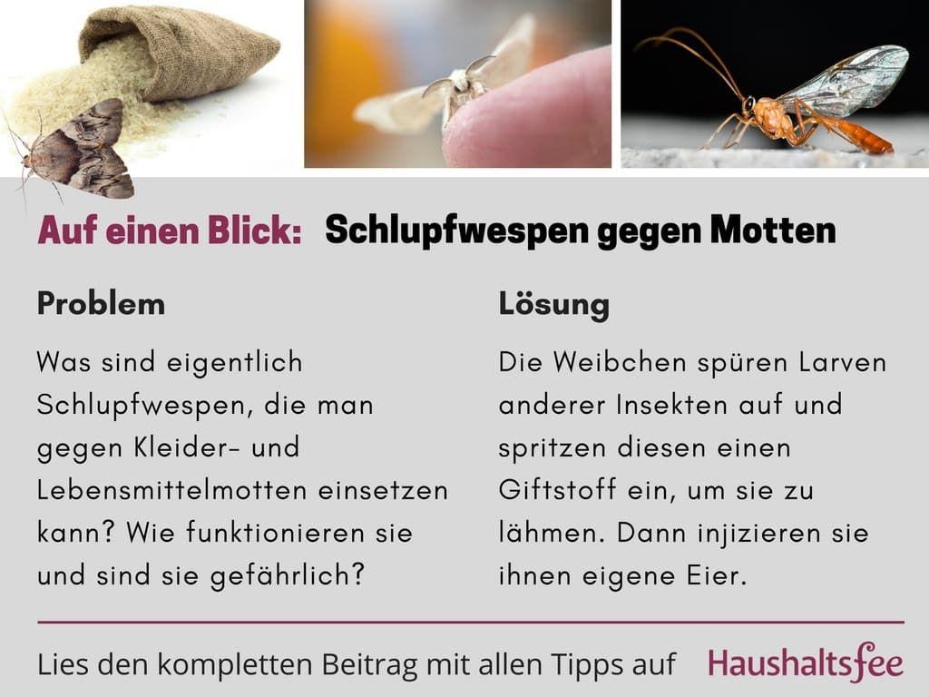 So Helfen Schlupfwespen Gegen Motten Haushaltsfee Org