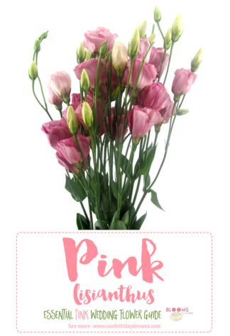 Essential pink wedding flowers guide names seasons pics flower learn about it other pink wedding flowers here httpconfettidaydreamstypes of pink wedding flowers names mightylinksfo