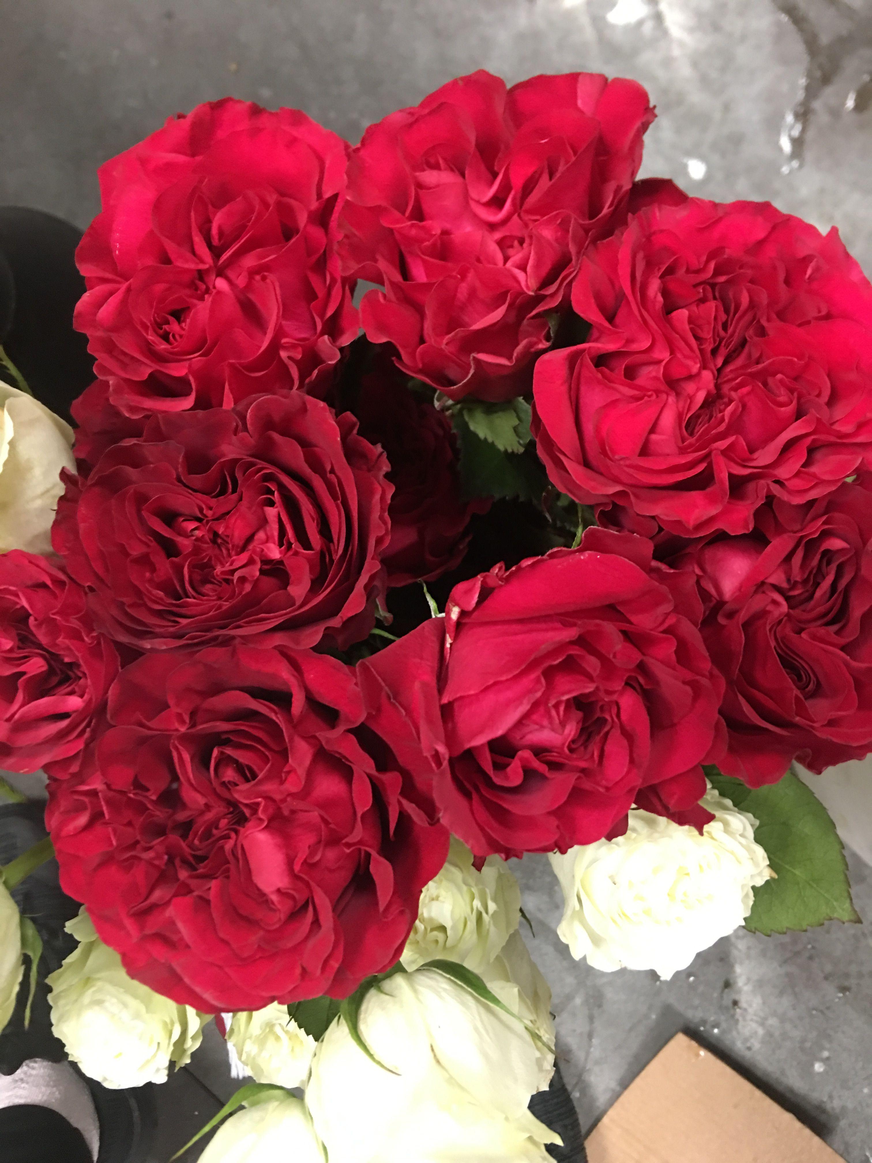Garden Roses Austin Florist Flower Delivery Rose