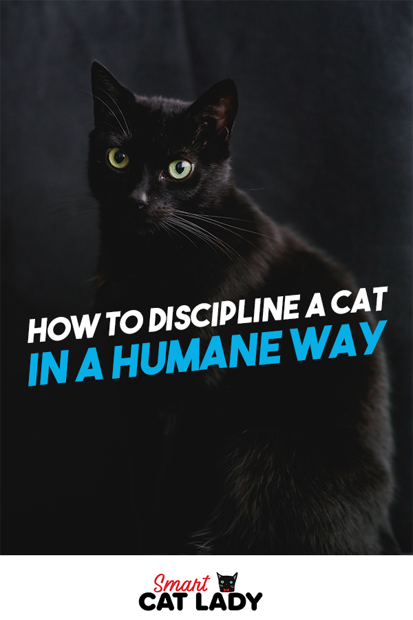 How To Discipline A Cat In A Humane Way Cats, Cat facts
