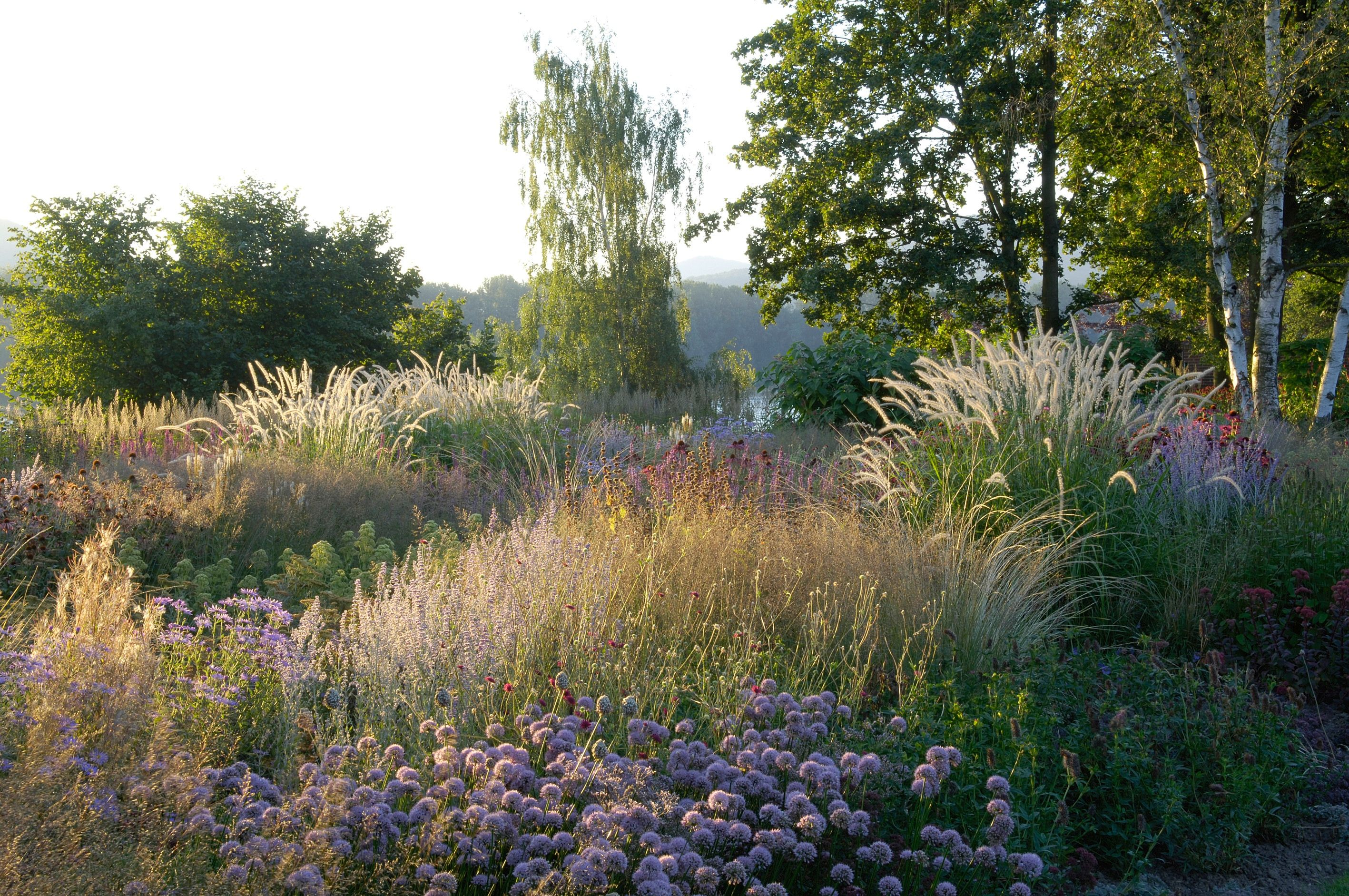 Piet oudolf yahoo image search results piet oudolf for Natural grasses for landscaping