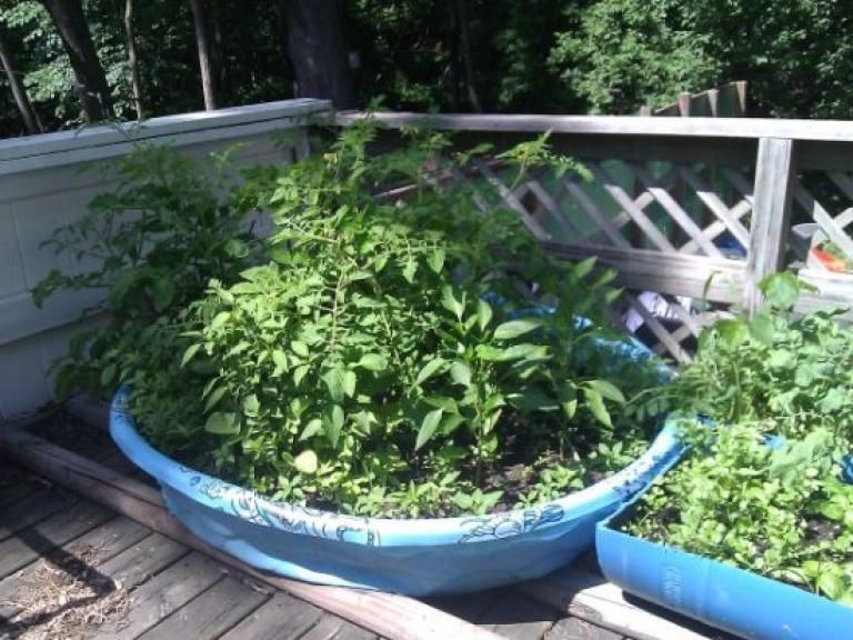 100 Admirable Gardens For Amazing Small Spaces Http Homedecors Info 100 Admirab Small Vegetable Gardens Small Space Gardening Container Gardening Vegetables