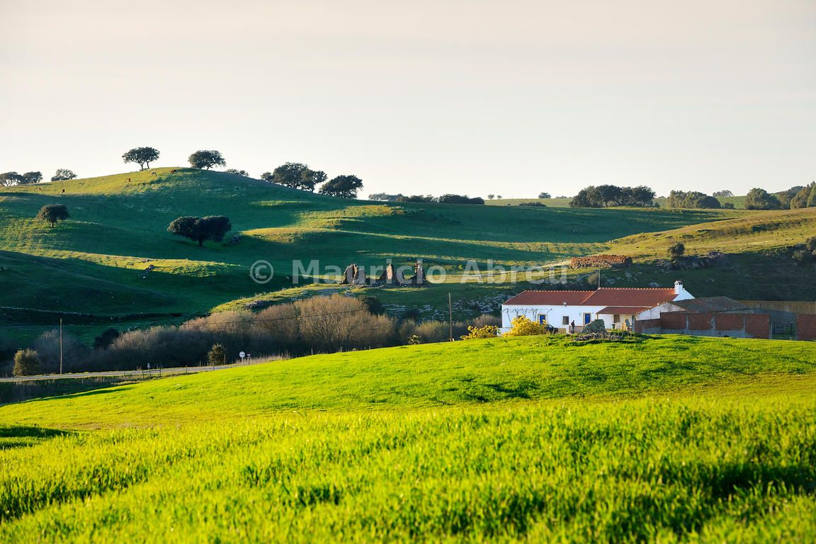 Cork trees in the vast plains of Alentejo. Portugal ...