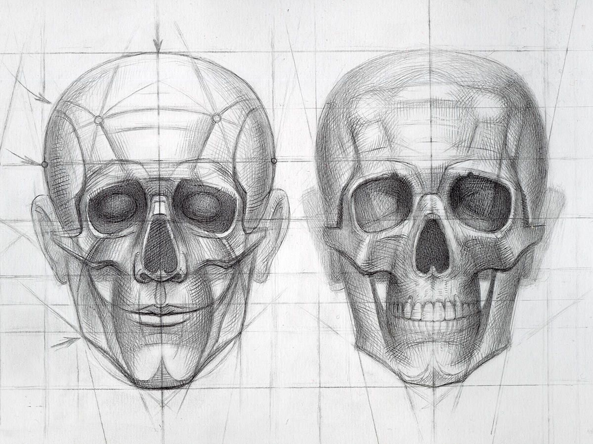 anatomy for artists head google search 3d sculpting class
