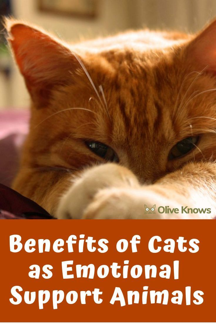 13++ Emotional support animal cat images