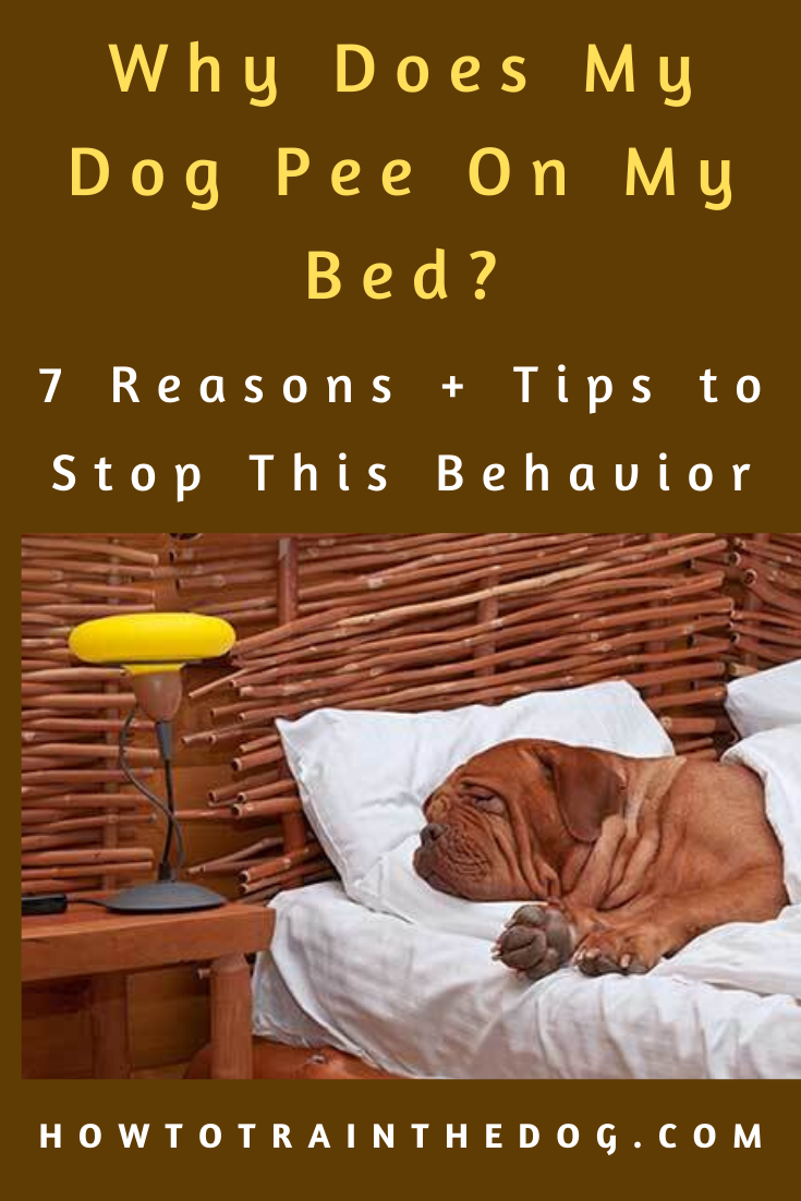 Why Does My Dog Pee On My Bed? Here's How I Stopped It