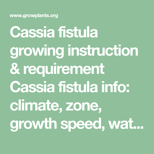 Photo of Cassia fistula growing instruction & requirement Cassia fistula info: climate, z…