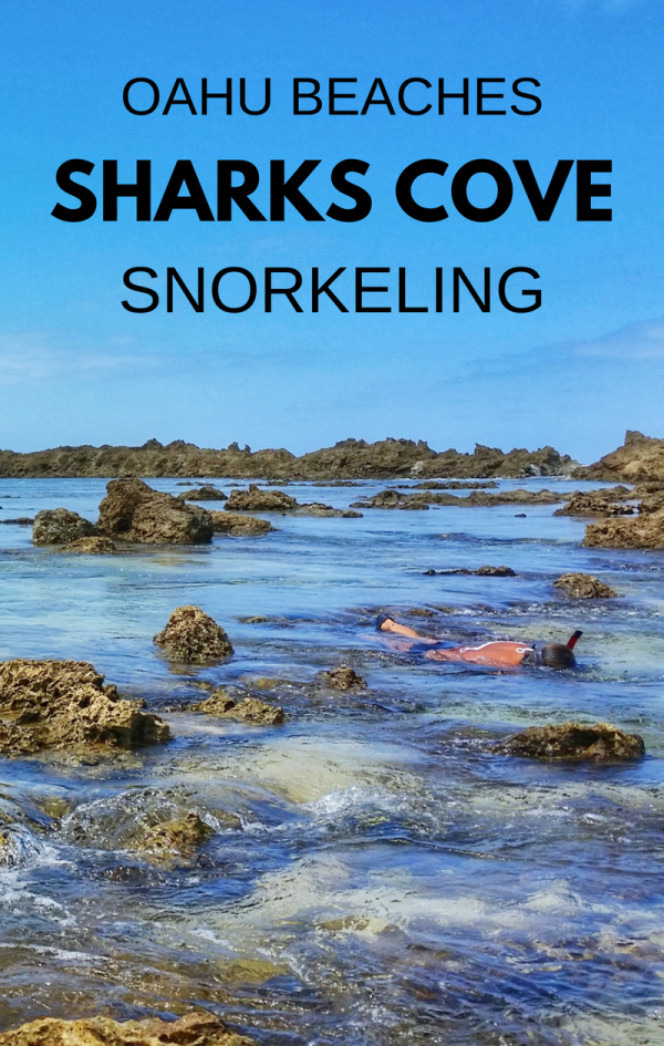 Shark's Cove Snorkeling Rental Prices 2017 :: North Shore