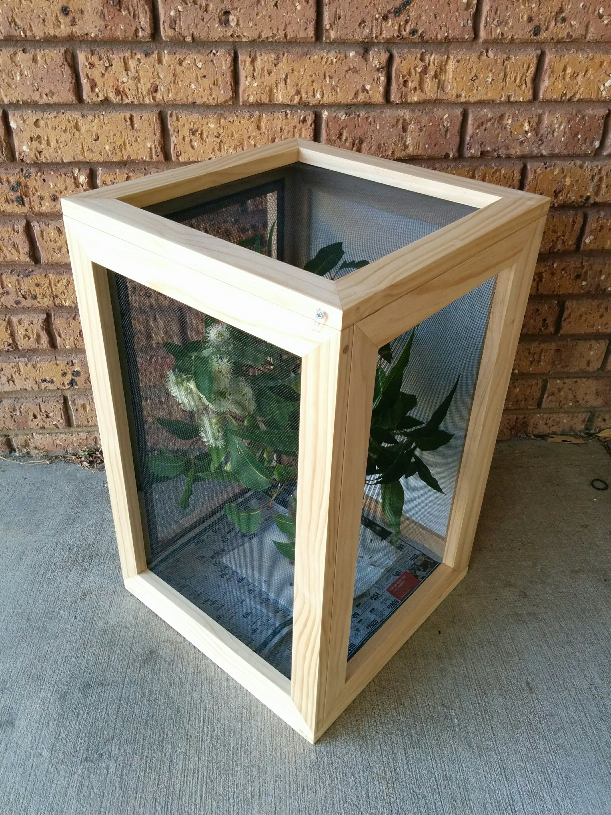 2019 handmade stick insect enclosure used to house