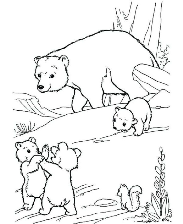 Pin by Fun Activity on Coloring Pages For Kids Bear