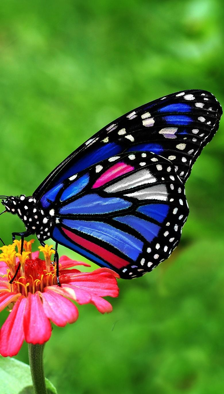 About Wild Animals: A beautiful butterfly   Butterfly ...