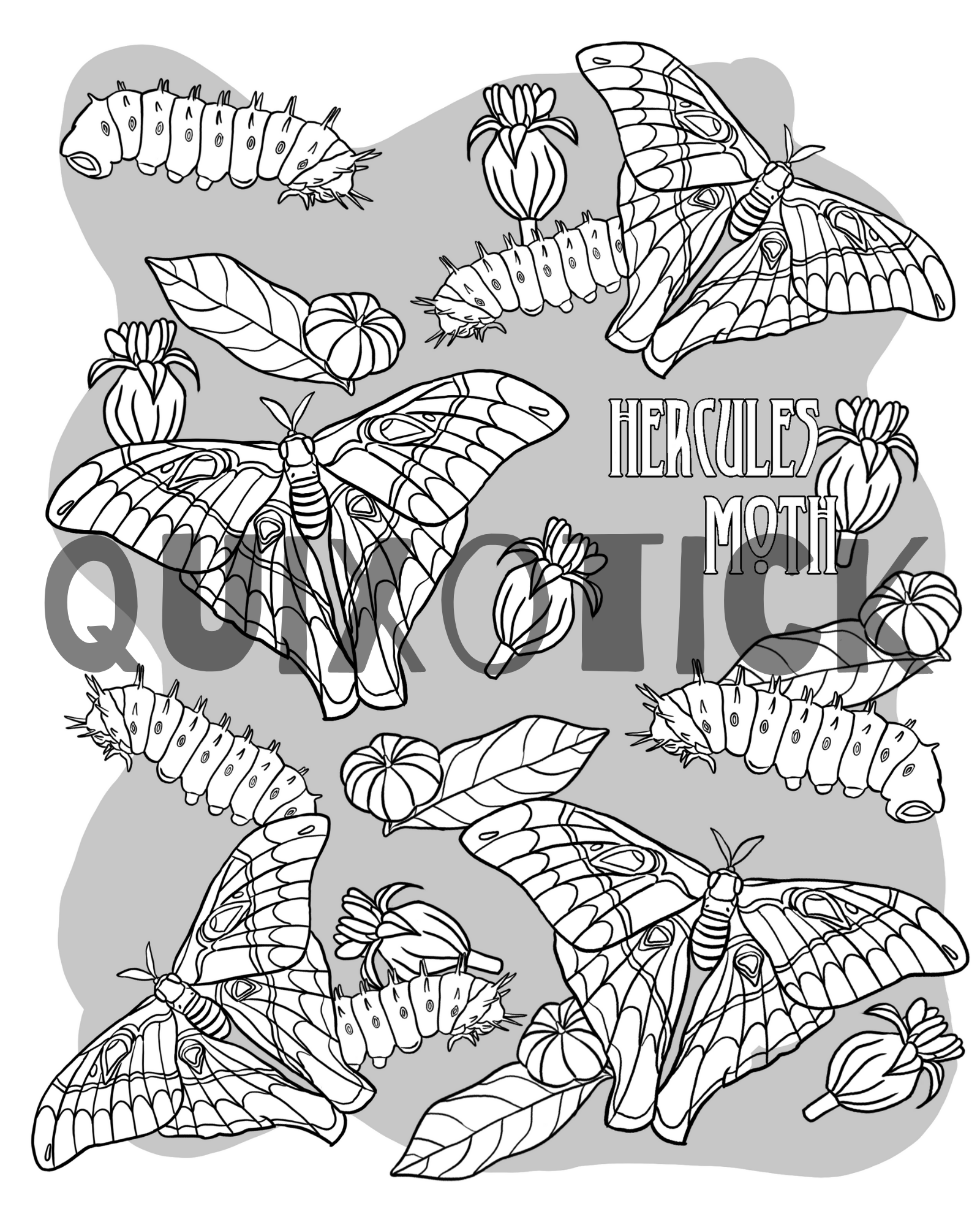 5 Moth Colouring Pages Instant Download Features 5 Moth Designs To Colour Hercules Moth Hercules Moth Colouring Pages Sunset Moth