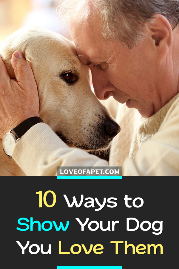 How To Show Your Dog You Love Them 10 Way Love Of A Pet Dogs Your Dog Dog Love