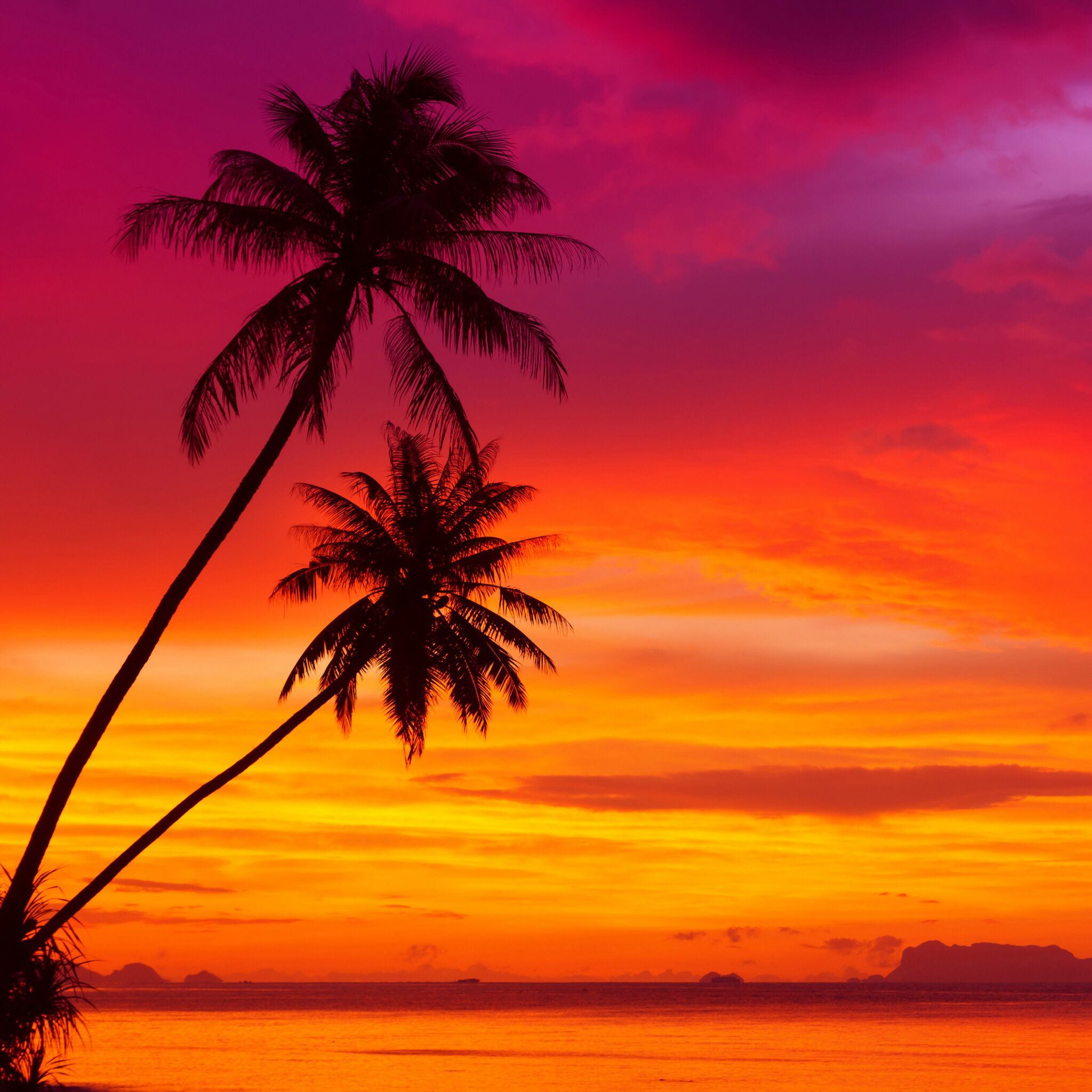 Pin By Paty L On Wallpaper Places Tropical Vibe Sunset Landscape Sunset Wallpaper Scenery Tropics palm trees sunset clouds sky