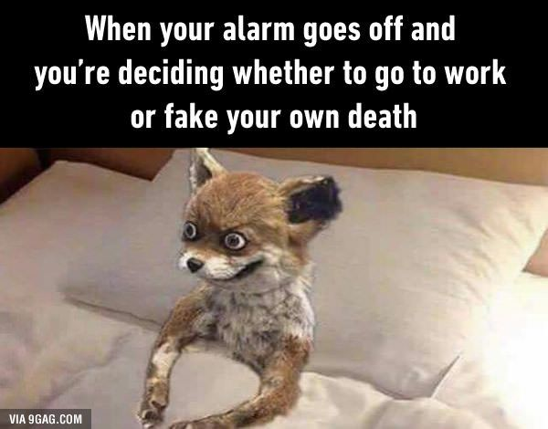 Funny Have A Good Day At Work Meme : Every morning memes hotel humor and sports food