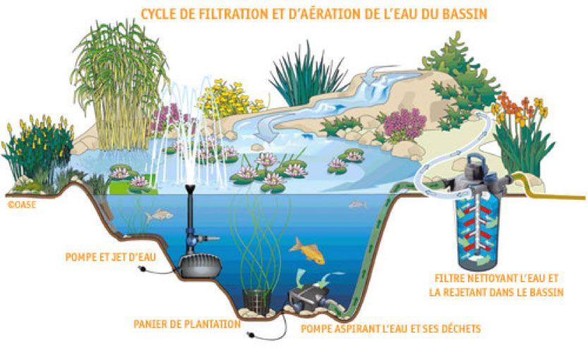 Plantes Pour Bassins Exterieurs Bassin A Poisson Rouge Avec