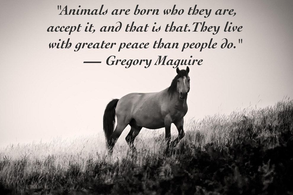Ordinaire 14 Inspiring Animal Quotes That Will Put Things In Perspective   Animalu0027s  Look