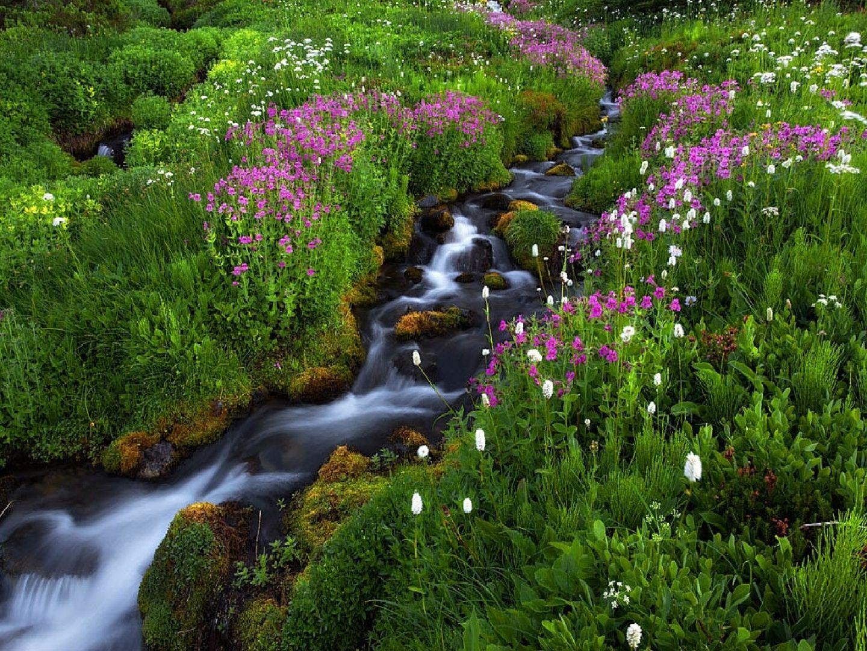 fotos de la primavera hermosas imagenes