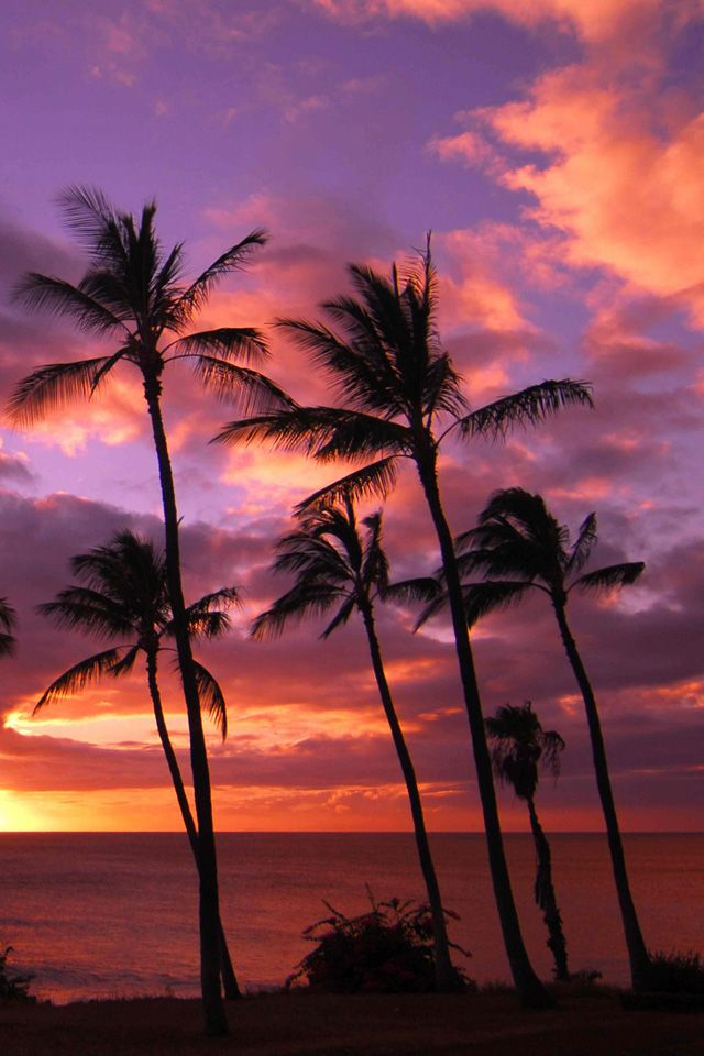 Hawaii Sunset Hawaii Sunset Paradise Beach Iphone Wallpaper