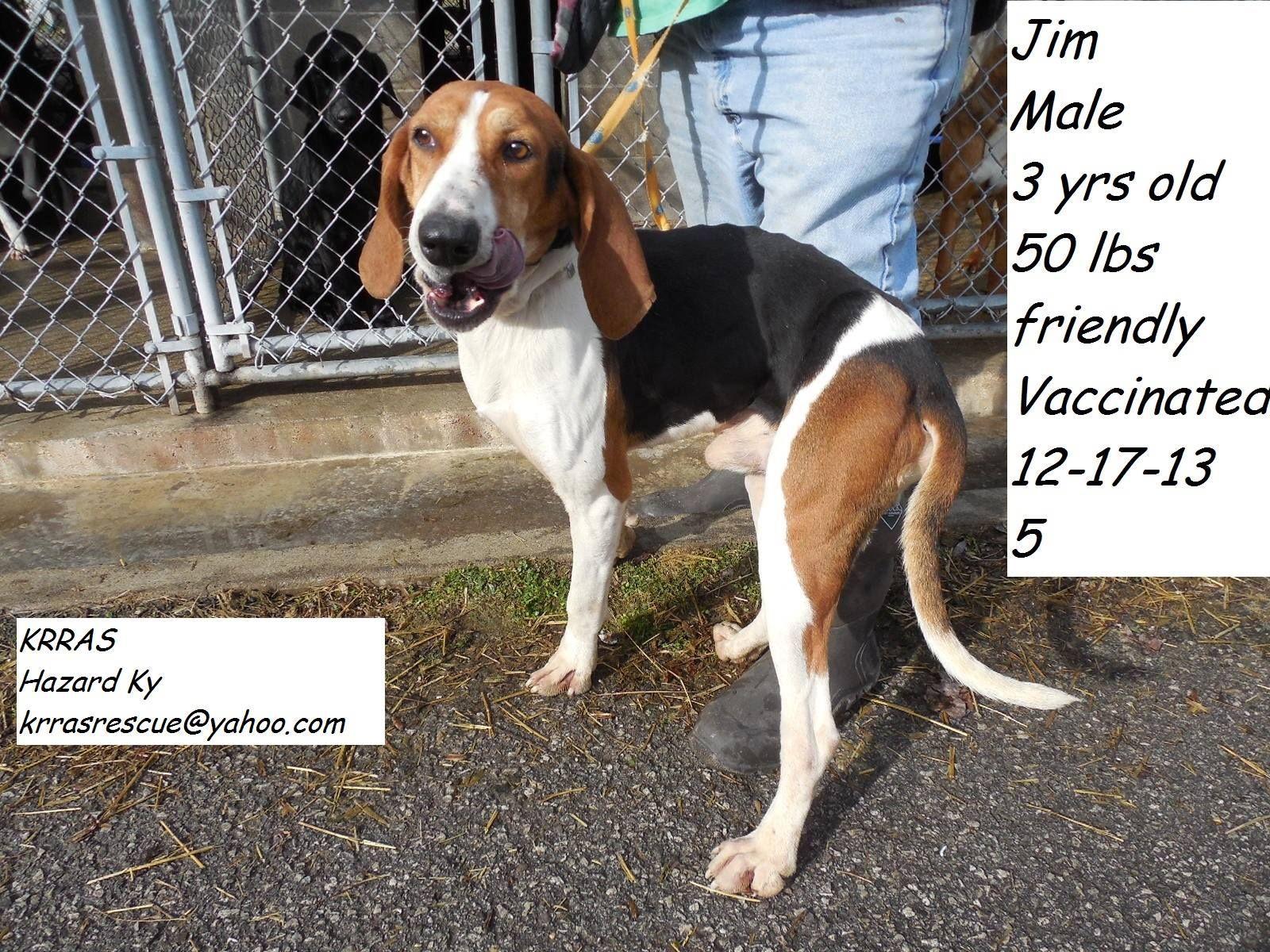 Treeing Walker Coonhound M 3 years 50 lbs  named Jim in