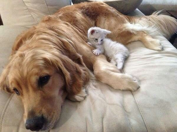 Picture Of Big Dog And Small Cat