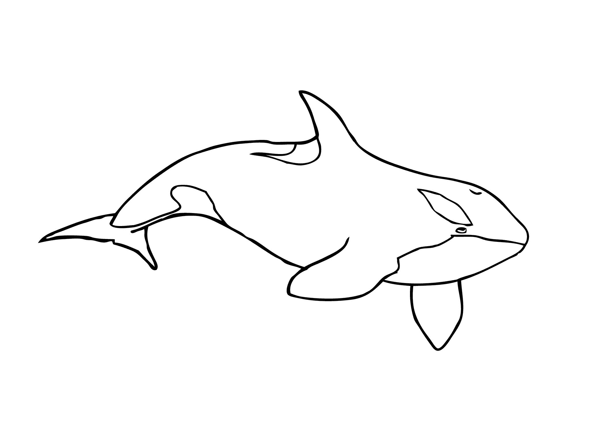 Shamu Coloring Pages Free In 2020 Whale Coloring Pages Shark Coloring Pages Animal Coloring Pages