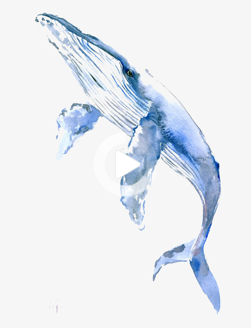 Blue Whale Whale Painting Whale Drawing Blue Whale Drawing