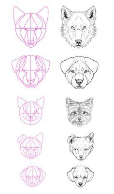 How To Draw A Wolf Head Step By Step Easy