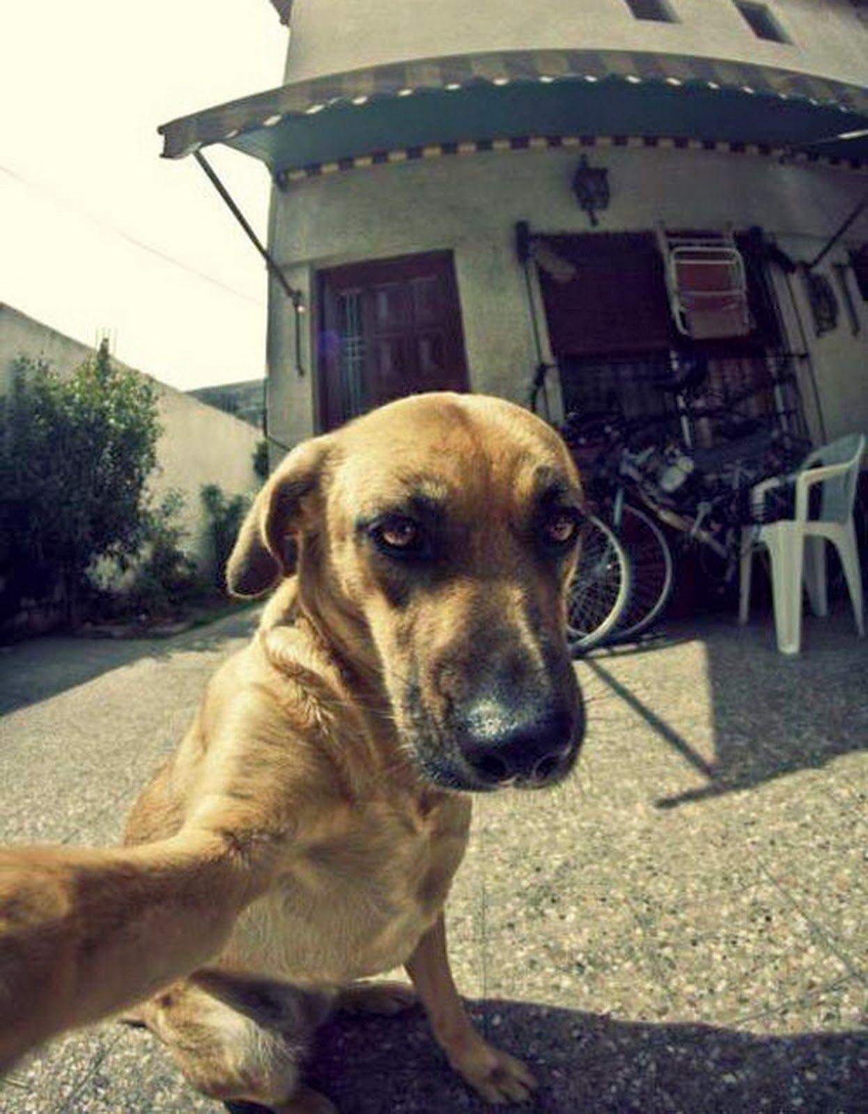 Hari Anjing Di Pantai Humor Pinterest