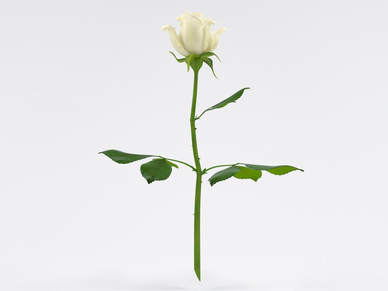 rose flowers 3d model 3d realtime animation moodboard