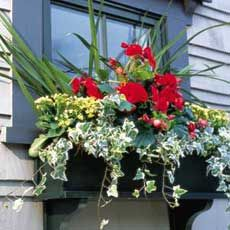 great window box and how to